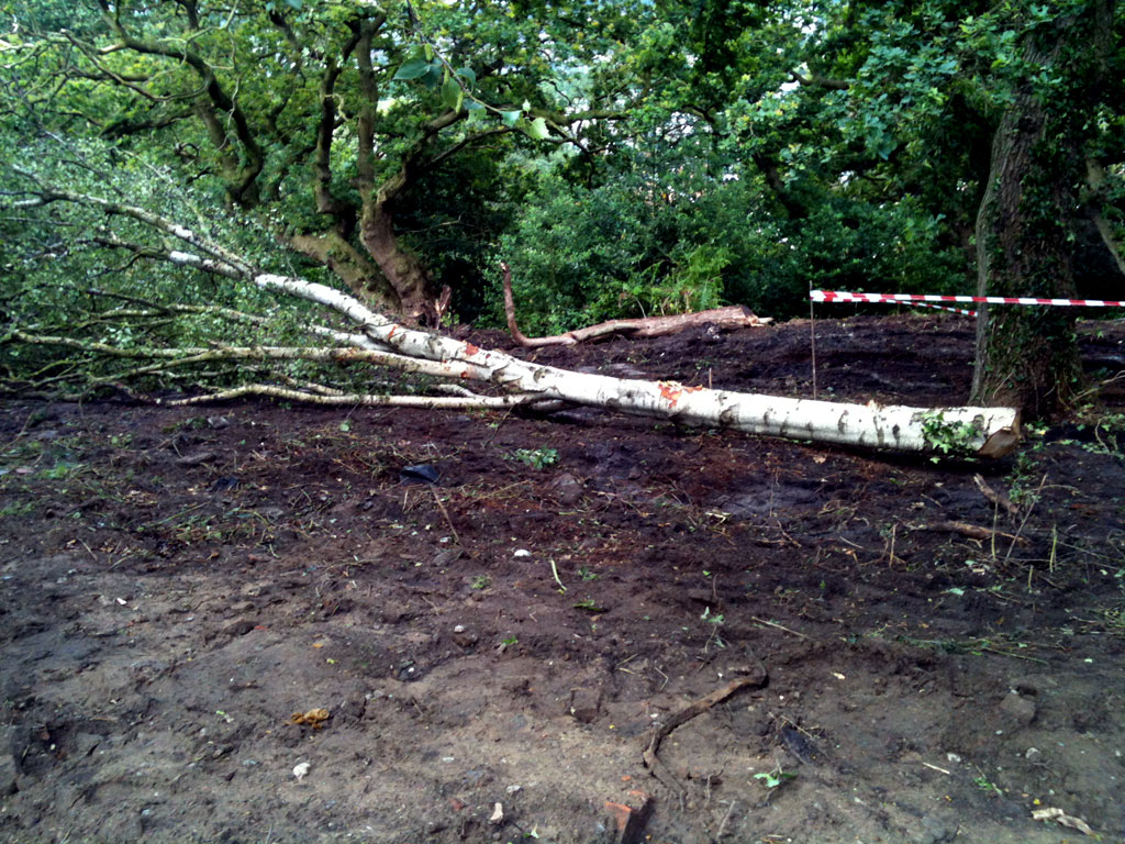 Pipistrelle Rise - Felled Tree