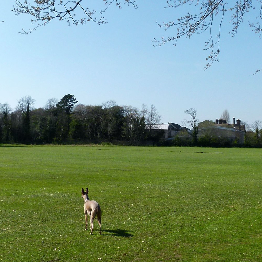 Rock Ferry High School Playing Fields
